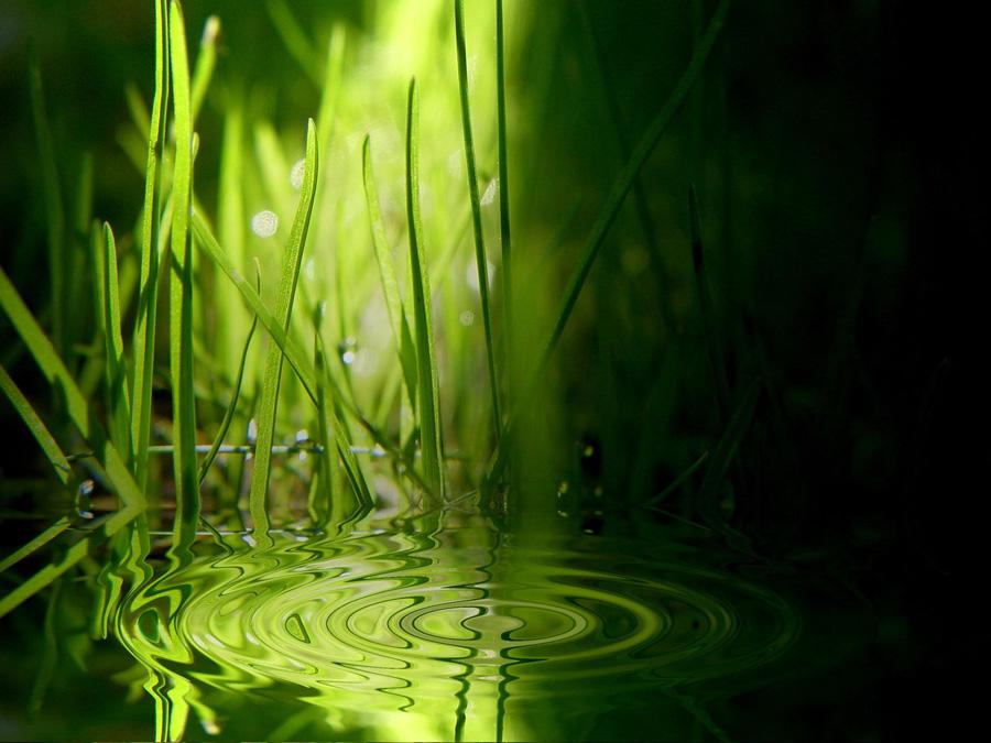 Grönt vatten